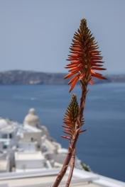 Santorini_Fira_33