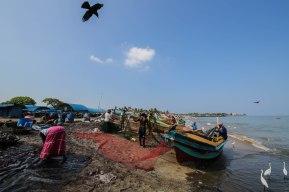 Fishing boats at Negombo beach, Sri Lanka