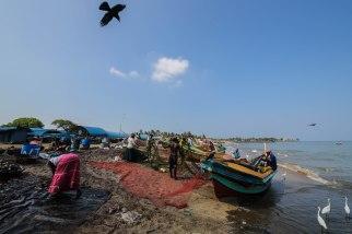 Negombo-beach-fishing