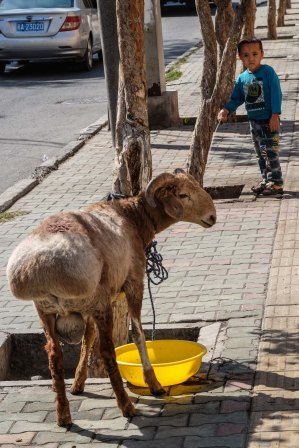 urumqi-china-sheep-child