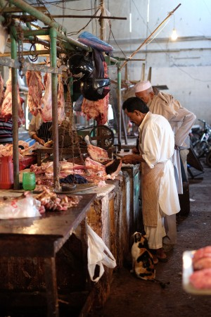 empress-market-karachi-meat-cat-1