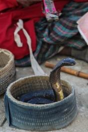 makli-hill-thatta-snake-charmer-1-2
