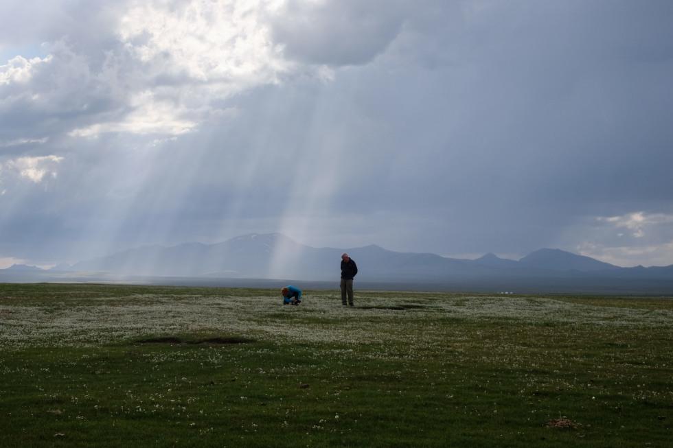 Sommer i Kirgisistan Albatros-19