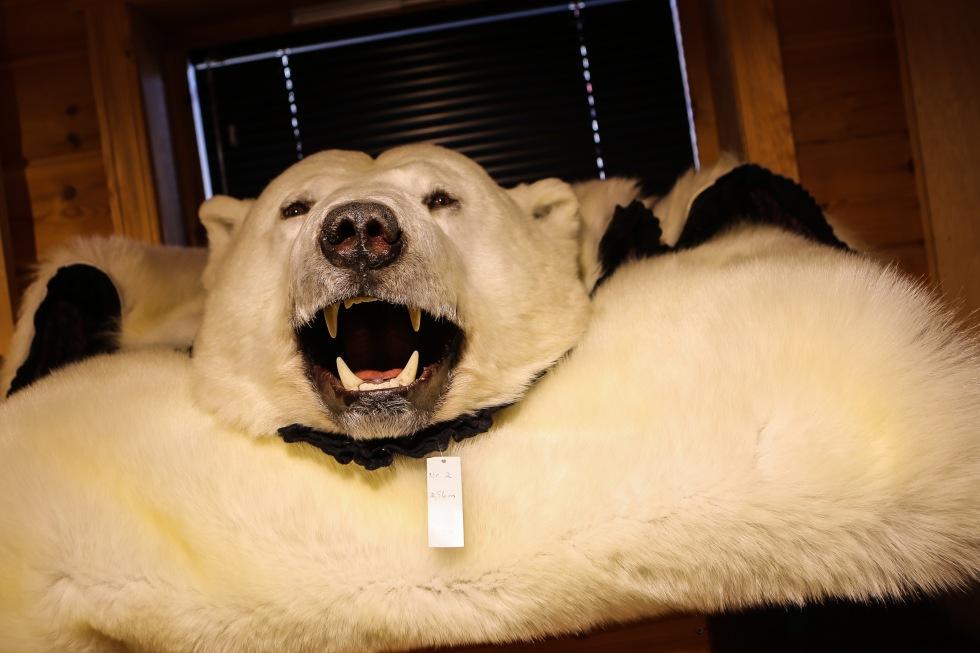 Best pictures Svalbard-3
