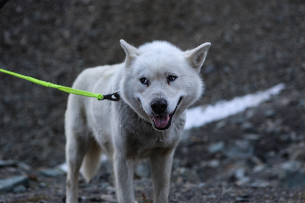 Best pictures Svalbard-32