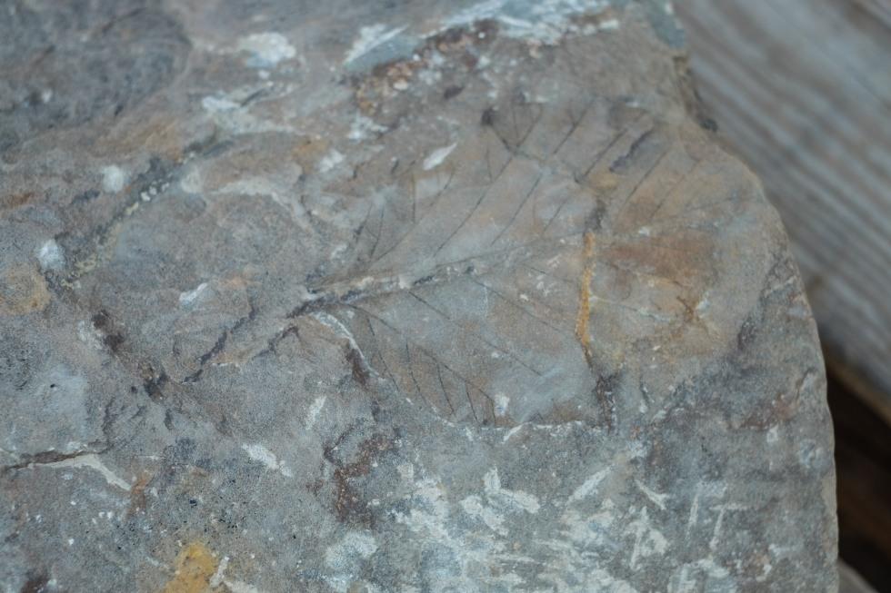 Fossil hunting Svalbard-2