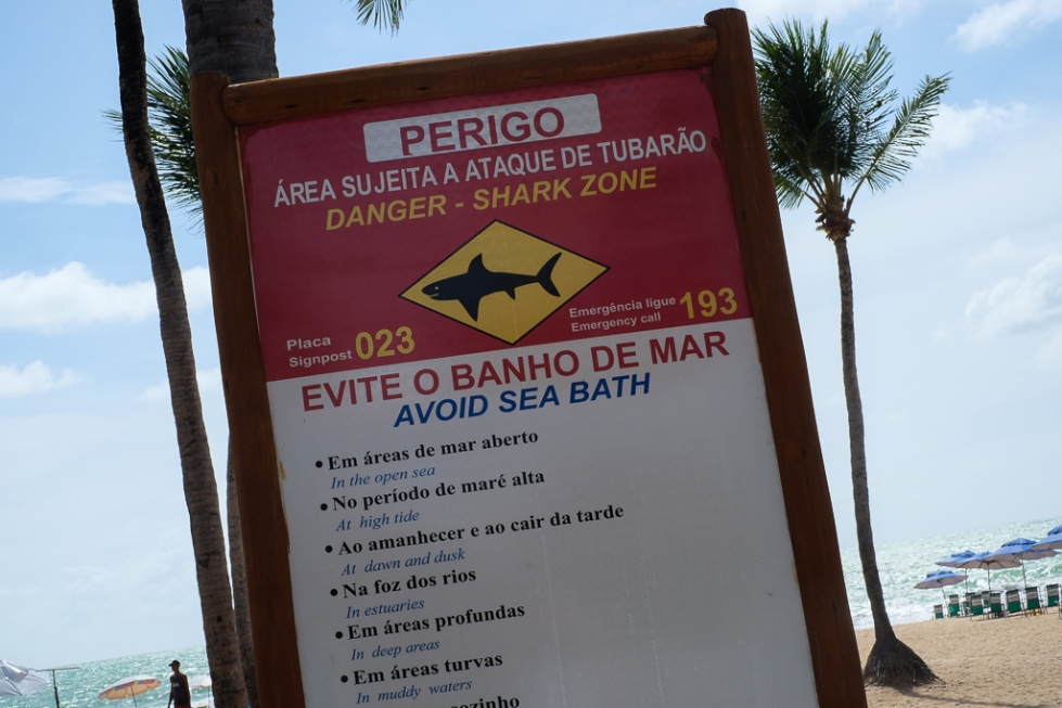 Recife Shark zone-1