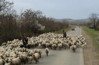 Trafikproblem på landsbygden