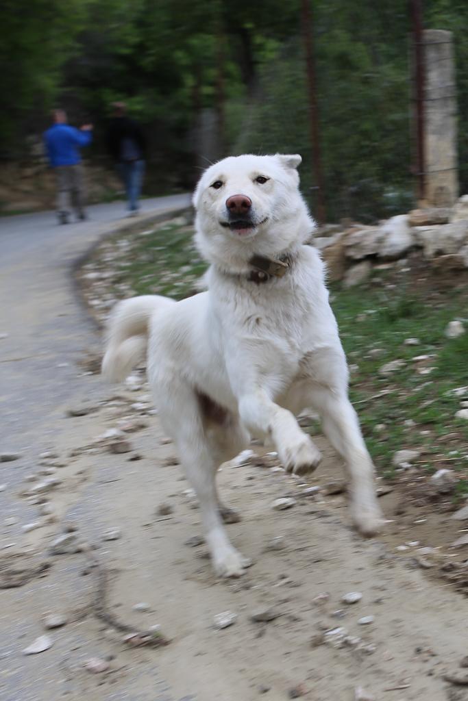 Dagestan-jumping-dog-7742