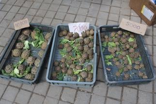 Tortoise Chorsu bazaar Tashkent-5446