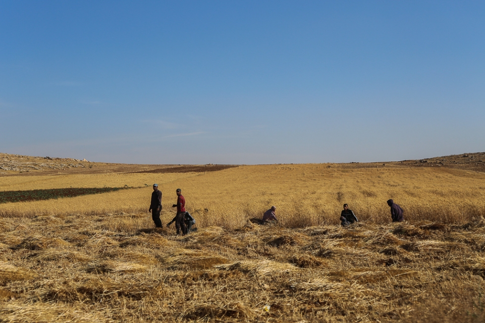 Farmers-in-field-Jordan-6454