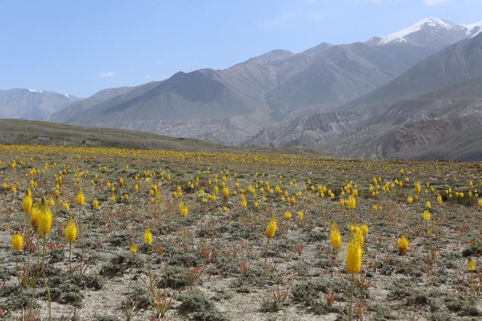 Best of Pamir Highway-1161
